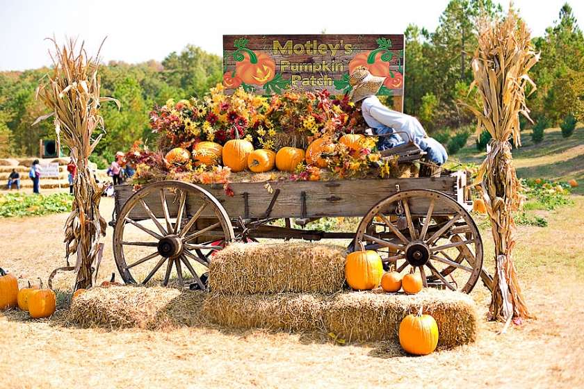 Live pig races and family fun at motley's pumpkin patch and.
